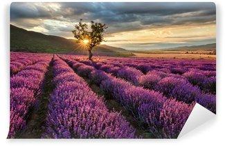 Papier Peint Vinyle Magnifique paysage avec un champ de lavande au lever du soleil