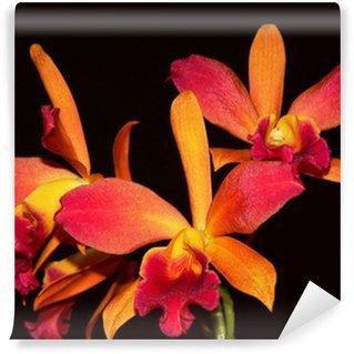 Papier Peint Vinyle Orchid 1