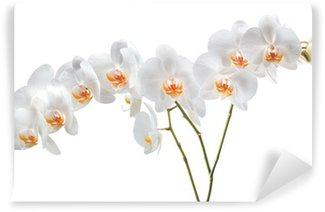 Papier Peint Vinyle Orchid 3