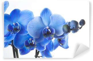 Papier Peint Vinyle Orchidée bleue