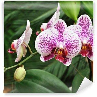 Papier Peint Vinyle Orchidées Orchid