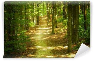 Papier Peint Vinyle Paysage de forêt