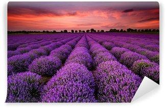 Papier Peint Vinyle Paysage magnifique avec un champ de lavande au coucher du soleil
