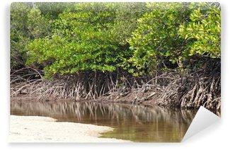 Papier Peint Vinyle Paysage tropical de la forêt de mangrove du sud de la Thaïlande