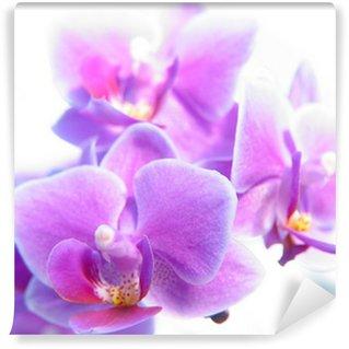 Papier Peint Vinyle Phalaenopsis