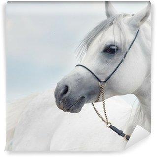 Papier Peint Vinyle Portrait doux de blanc magnifique étalon arabe à ciel Fond