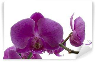 Papier Peint Vinyle Puple Orchid