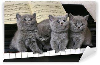 Papier Peint Vinyle Quatre chatons britanniques sur le piano