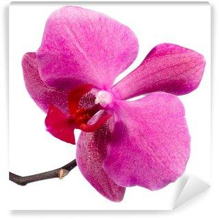 Papier Peint Vinyle Red orchid