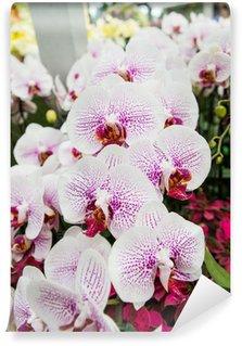 Papier Peint Vinyle Science Orchid