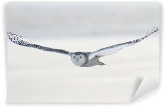 Papier Peint Vinyle Snowy Owl - Bubo Scandiacus