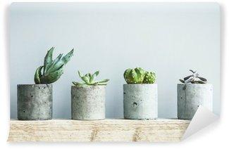 Papier Peint Vinyle Succulentes en pot béton bricolage. Chambre scandinave décoration intérieure