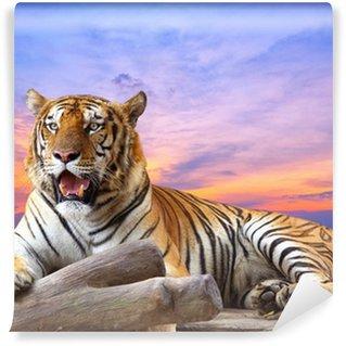 Papier Peint Vinyle Tiger cherchez quelque chose sur la roche avec un beau ciel au coucher du soleil