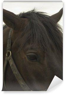 Papier Peint Vinyle Triste portrait de cheval