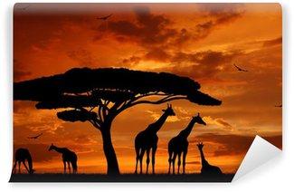 Papier Peint Vinyle Troupeau de girafes dans le soleil couchant