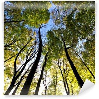 Papier Peint Vinyle Vue du ciel dans la forêt