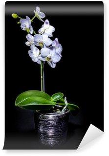 Papier Peint Vinyle White Orchid