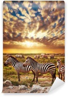 Papier Peint Vinyle Zèbres troupeau sur la savane africaine au coucher du soleil. Safari Serengeti