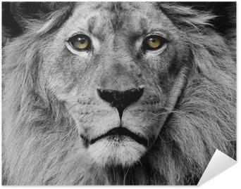 Pixerstick Poster Lion ögon