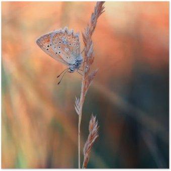 Plakat Sommerfugl