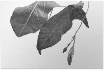 Sort og hvid makrofoto af planteobjekt med dybdeskarphed Plakat