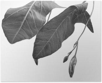 Plakat Svart og hvitt makrofoto av planteobjekt med dybdeskarphet