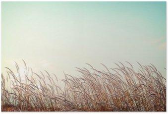 Plakát Abstraktní vintage pozadí přírody - měkkost bílé pírko trávy s retro modrou oblohou prostor