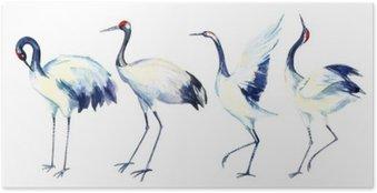 Plakát Akvarel asijských jeřáb pták set