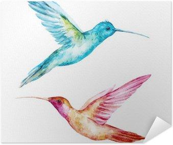 Plakát Akvarel colibri pták