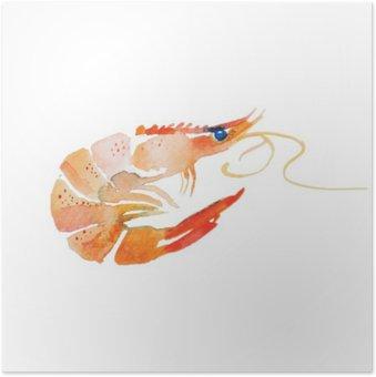 Plakát Akvarel krevety.