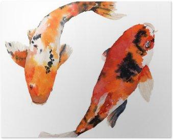 Plakát Akvarel orientální duha kapr nastaven. Koi ryby na bílém pozadí. Podvodní ilustrace pro návrh, pozadí nebo textilie