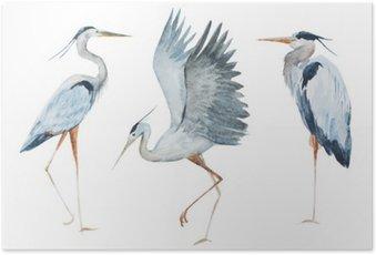 Plakát Akvarel volavka ptáků