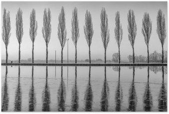 Plakát Alberi Riflessi sul Lago all'alba v bianco e nero