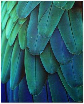 Plakát Ara peří (modrá / zelená)