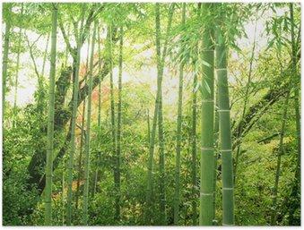 Plakát Bamboo