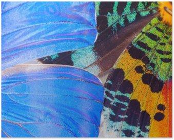 Plakát Barevných motýlů křídlo