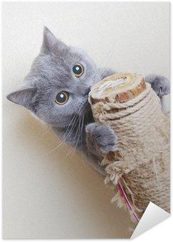 Plakát Britská kočka poškrábání příspěvky