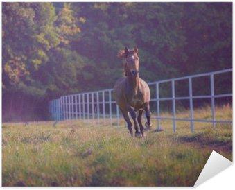 Plakát Brown kůň cválá na stromech pozadí podél bílým plotem v létě