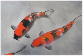 Plakát Calico koi ryby Akvarel Ilustrace