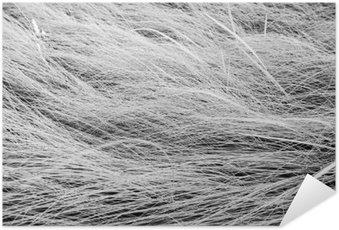 Plakát Černobílá fotografie, zblízka dlouhé louky textury backgrou