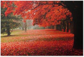 Plakát Červený na podzim v parku