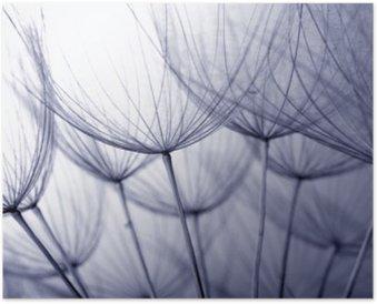 Plakát Dandelion seeds