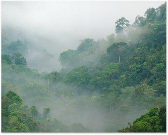 Plakát Deštný prales ranní mlha