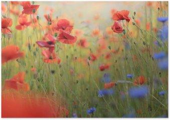 Plakát Divoká květina louka s vlčí máky a chrpy