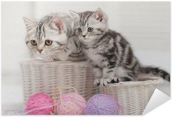 Plakát Dvě kočky v košíku s míčky příze