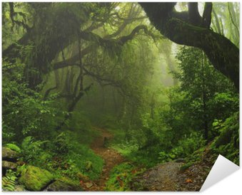 Plakát Forest Nepál