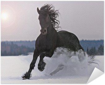 Plakát Frisian koně na sněhu