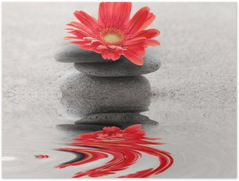 Plakát Galets et reflet gerbera zen
