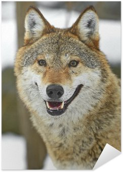 Plakát Gray Wolf