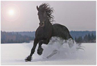 Plakat HD Frisian jazda na śniegu